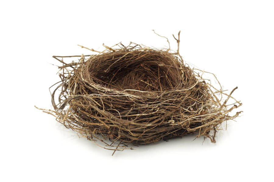 Photo of nest