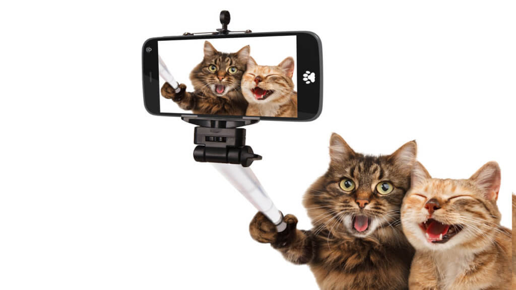 Cats taking a selfie photo